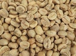 Rohe-Kaffeebohnen-Nicaragua