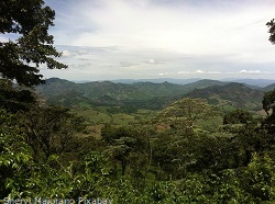 Kaffeeplantage-Nicaragua