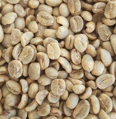 Guatemala Lampocoy Grand Cru Gourmetkaffee Arabica 4 Kg Rohkaffee