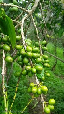 Kerala-Kaffee-Muhsin-Mohd