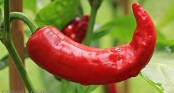 pepperoni-1539472_1280