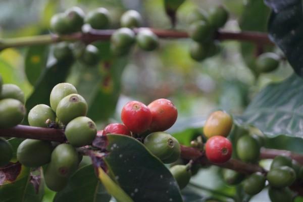 kaffeespezialitaeten